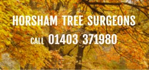Horsham Tree Surgeons website